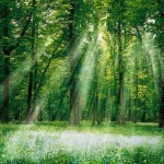 1263076874_magical-forest